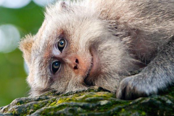Щаслива мавпочка